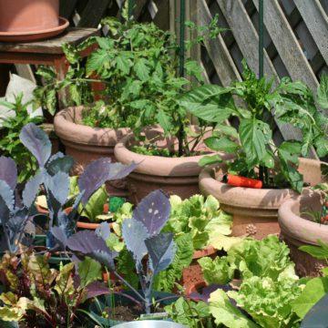 Planter un potager sur son balcon