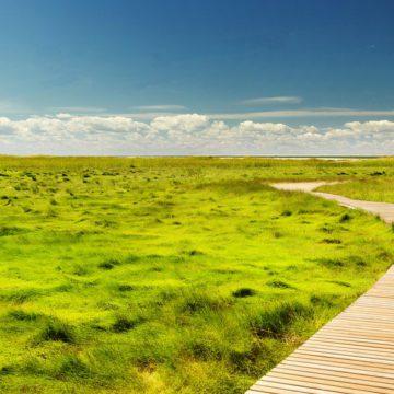 Cours de Sophro' n°2 : Se ressourcer dans un lieu de bien-être