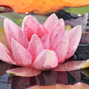 Méditer, un moment slow rien qu'à soi…
