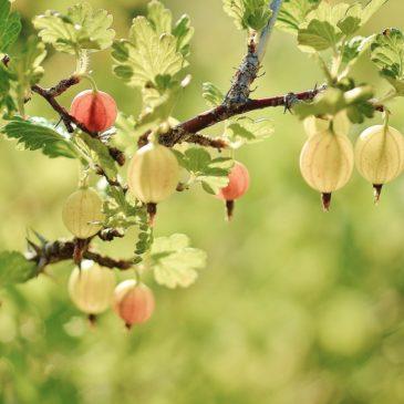 Parution du livre «Cultiver son jardin en pleine conscience» !