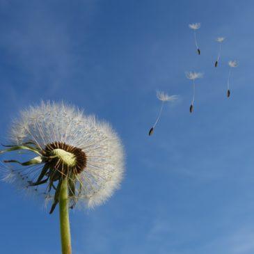 Adoptez le rythme estival ! Respirez et décompressez…