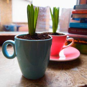 tasse-plante