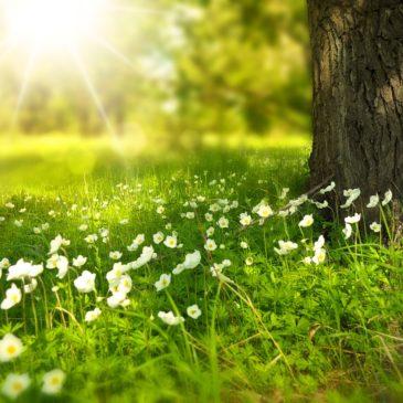 5 moments slow dans la nature !